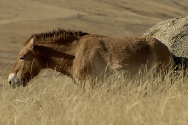 horsepower-1